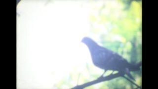 Film still of the film Tiny Bird, directed by Dane Komljen, Visions du Réel 2018